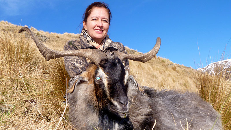 Goat Hunting in New Zealand
